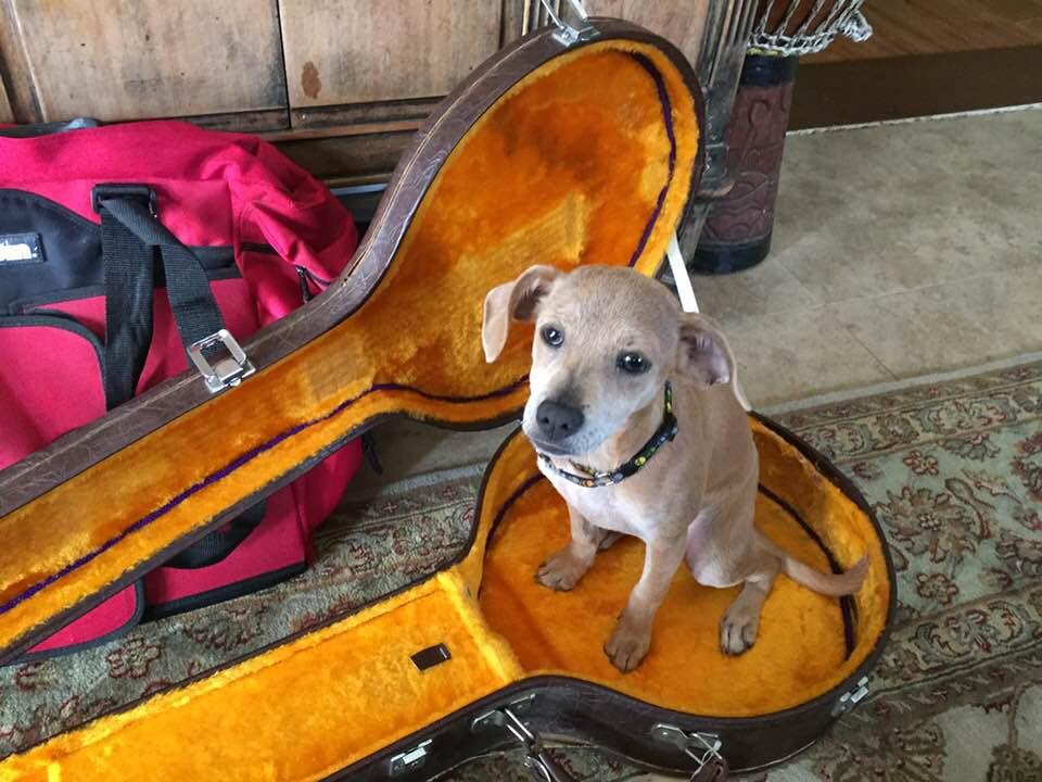 Banjo in banjo case